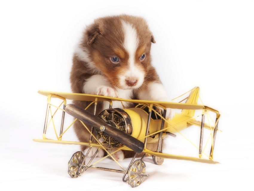 Chiot_Avion_NonLibreDeDroit.jpg