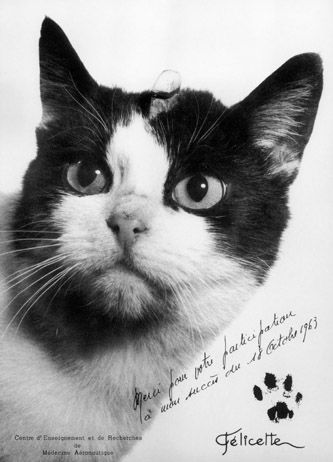 Felicette-chat-18-10-1963-france-veroniqueAGI.jpg